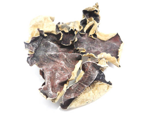 Picture of BLACK FUNGUS (100G) L-SIZE
