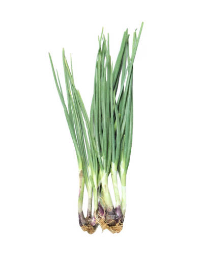 Picture of VEG-ONION SPRING (100G)