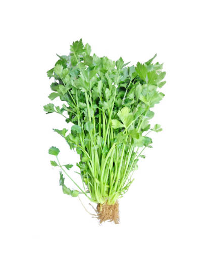 Picture of VEG-CELERY(100G)FRESH-CHINESE