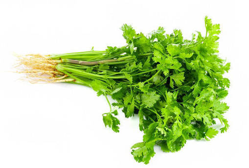 Picture of CORIANDER/ PARSLEY CHINESE